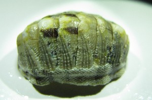(Chiton viridis - ECOSUR-OH-M0088)  @11 [ ] CreativeCommons – Attribution Non-Commercial (by-nc) (2016) Unspecified Unspecified