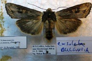 ( - 20182-131006-BU)  @11 [ ] Copyright (2013) Aidas Saldaitis Vilinus Ecological Institute