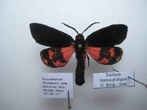 (Eucharia - 10435-300407-KA)  @13 [ ] Copyright (2011) Aidas Saldaitis Vilinus Ecological Institute