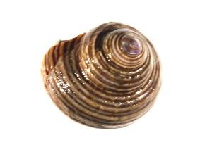 ( - CCDB13757-D05)  @13 [ ] CreativeCommons - Attribution Non-Commercial Share-Alike (2014) Kara Layton Biodiversity Institute of Ontario