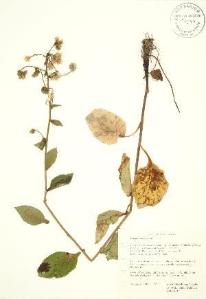 ( - RBG 159)  @11 [ ] Copyright (2009) Steven Newmaster University of Guelph BIO Herbarium