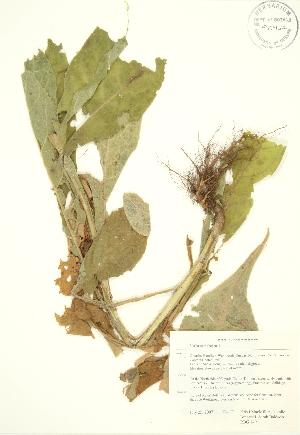 ( - RBG 149)  @11 [ ] Copyright (2009) Steven Newmaster University of Guelph BIO Herbarium