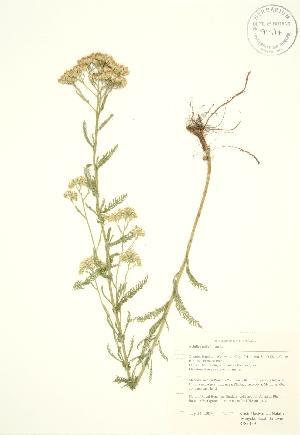 ( - RBG 139)  @11 [ ] Copyright (2009) Steven Newmaster University of Guelph BIO Herbarium