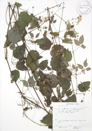 ( - RBG 010)  @11 [ ] Copyright (2009) Steven Newmaster University of Guelph BIO Herbarium
