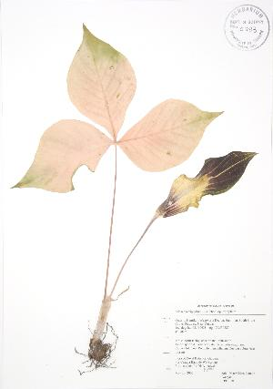 ( - RBG 030)  @11 [ ] Copyright (2009) Unspecified University of Guelph BIO Herbarium