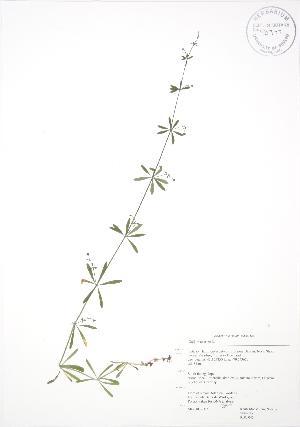 ( - RBG 045)  @11 [ ] Copyright (2009) Unspecified University of Guelph BIO Herbarium
