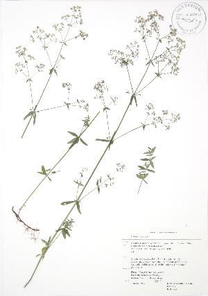 ( - RBG 065)  @11 [ ] Copyright (2009) Steven Newmaster University of Guelph BIO Herbarium