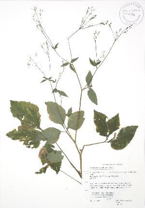 ( - RBG 085)  @11 [ ] Copyright (2009) Steven Newmaster University of Guelph BIO Herbarium