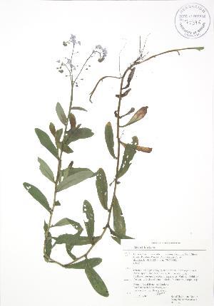 ( - RBG 143)  @11 [ ] Copyright (2009) Steven Newmaster University of Guelph BIO Herbarium