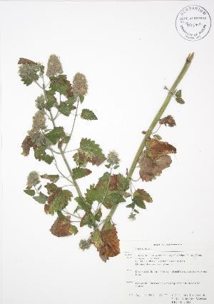 ( - RBG-Blitz 005)  @11 [ ] Copyright (2009) Steven Newmaster University of Guelph BIO Herbarium