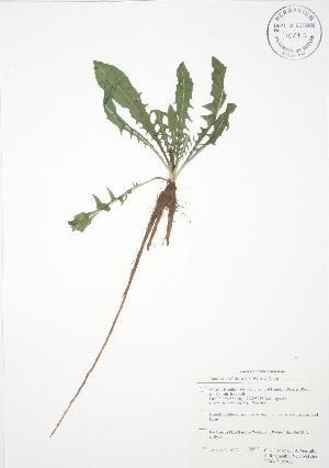 ( - RBG-Blitz 022)  @11 [ ] Copyright (2009) Steven Newmaster University of Guelph BIO Herbarium