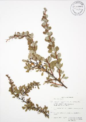 ( - RBG-Blitz 021)  @11 [ ] Copyright (2009) Unspecified University of Guelph BIO Herbarium