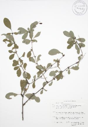 ( - RBG 117)  @11 [ ] Copyright (2009) Unspecified University of Guelph BIO Herbarium