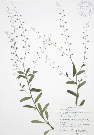 ( - RBG 055)  @11 [ ] Copyright (2009) Steven Newmaster University of Guelph BIO Herbarium