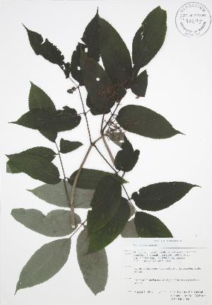 ( - RBG-Blitz 056)  @11 [ ] Copyright (2009) Steven Newmaster University of Guelph BIO Herbarium