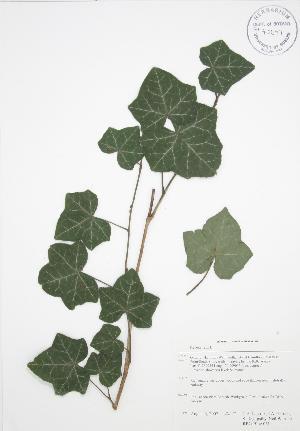 ( - RBG-Blitz 061)  @11 [ ] Copyright (2009) Steven Newmaster University of Guelph BIO Herbarium