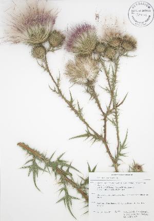 ( - RBG-Blitz 037)  @11 [ ] Copyright (2009) Steven Newmaster University of Guelph BIO Herbarium