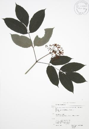 ( - RBG 075)  @11 [ ] Copyright (2009) Steven Newmaster University of Guelph BIO Herbarium