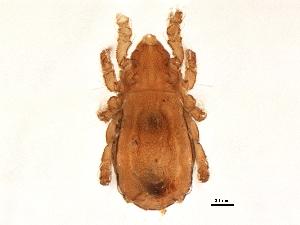 (Nothridae - BIOUG08057-C01)  @15 [ ] CreativeCommons - Attribution Non-Commercial Share-Alike (2014) BIO Photography Group Biodiversity Institute of Ontario