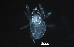 (Alycidae - BIOUG26736-F10)  @14 [ ] CreativeCommons - Attribution Non-Commercial Share-Alike (2016) CBG Photography Group Centre for Biodiversity Genomics