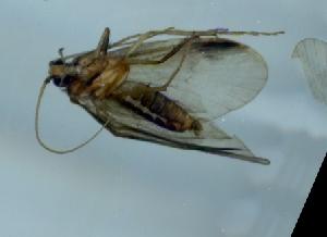 (Phryganopsychidae - TVTRI0308)  @12 [ ] Unspecified (default): All Rights Reserved  Unspecified Unspecified
