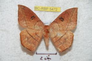 (Periga - BC-RBP 5472)  @15 [ ] Copyright (2010) Ron Brechlin Research Collection of Ron Brechlin