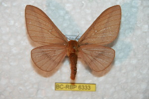 (Anisota assimilis - BC-RBP 6333)  @15 [ ] Unspecified (default): All Rights Reserved  Ron Brechlin Unspecified