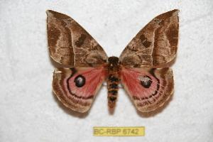 (Automerella - BC-RBP 6742)  @15 [ ] Copyright (2012) Ron Brechlin Research Collection of Ron Brechlin
