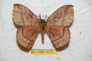 (Prohylesia - BC-RBP 6767)  @15 [ ] Copyright (2012) Ron Brechlin Research Collection of Ron Brechlin