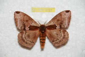 (Molippa - BC-RBP 8127)  @15 [ ] Copyright (2013) Ron Brechlin Research Collection of Ron Brechlin