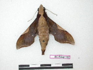 ( - BC-Roug1167)  @14 [ ] Copyright (2010) Jean Haxaire Research Collection of Jean Haxaire