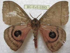 ( - BC-EvS 0393)  @13 [ ] Copyright (2010) Eric Van Schayck Research Collection of Eric Van Schayck