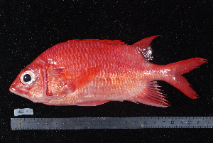( - NBE0353)  @14 [ ] No Rights Reserved  Unspecified Unspecified