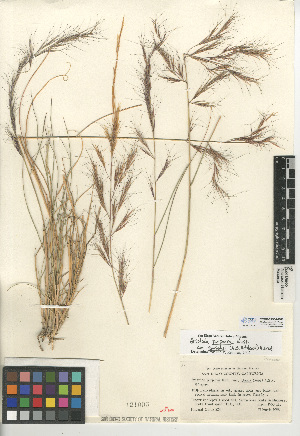 (Aristida purpurea var. parishii - CCDB-24954-G08)  @11 [ ] CreativeCommons - Attribution Non-Commercial Share-Alike (2015) SDNHM San Diego Natural History Museum