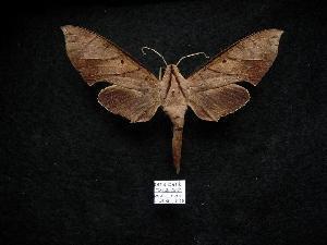 ( - NYSM 06-08-26-21)  @14 [ ] Copyright (2010) Morton S. Adams Research Collection of Morton S. Adams