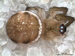 (Naatlo - SFU1NBR036)  @12 [ ] CreativeCommons - Attribution  Facundo M. Labarque Museo Argentino de Ciencias Naturales