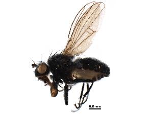 (Coenia - BIOUG06304-G06)  @15 [ ] CreativeCommons - Attribution Non-Commercial Share-Alike (2016) BIO Photography Group Biodiversity Institute of Ontario