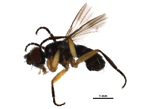 (Catharosia - BIOUG05324-C05)  @13 [ ] CreativeCommons - Attribution Non-Commercial Share-Alike (2016) BIO Photography Group Biodiversity Institute of Ontario