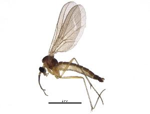 (Diadocidiidae - BIOUG06187-B05)  @14 [ ] CreativeCommons - Attribution Non-Commercial Share-Alike (2014) BIO Photography Group Biodiversity Institute of Ontario