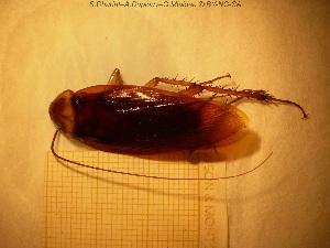 ( - sc_01316)  @11 [ ] CreativeCommons – Attribution Non-Commercial Share-Alike (2014) Sylvain Charlat Laboratoire de Biométrie et Biologie évolutive, CNRS, Université Lyon 1