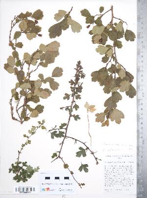( - TRT150)  @11 [ ] Copyright (2012) Tim Dickinson Royal Ontario Museum