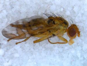 ( - DNA 20090712-02)  @13 [ ] Copyright (2010) B.T. Reijnen NCB Naturalis