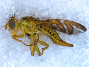 ( - DNA 20090715-03)  @13 [ ] Copyright (2010) B.T. Reijnen NCB Naturalis