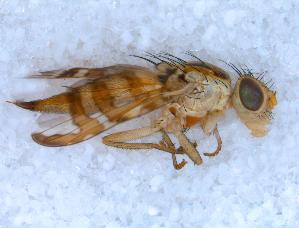 ( - DNA 20090721-11)  @13 [ ] Copyright (2010) B.T. Reijnen NCB Naturalis