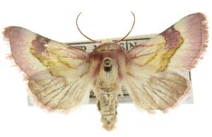 (Philareta - BIOUG07540-F05)  @15 [ ] CreativeCommons - Attribution Non-Commercial Share-Alike (2012) BIO Photography Group Biodiversity Institute of Ontario
