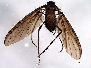 (Penthetria - 08TTML-2333)  @14 [ ] CreativeCommons - Attribution Non-Commercial Share-Alike (2010) BIO Photography Group Biodiversity Institute of Ontario