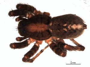 ( - 06-KADIR-H03)  @13 [ ] CreativeCommons - Attribution  Gergin Blagoev, Biodiversity Intitute of Ontario Unspecified
