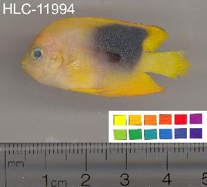 ( - HLC-11994)  @11 [ ] CreativeCommons - Attribution Non-Commercial Share-Alike (2010) CBG Photography Group Centre for Biodiversity Genomics