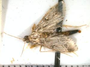 ( - Moth 3)  @12 [ ] Unspecified (default): All Rights Reserved  Unspecified Unspecified