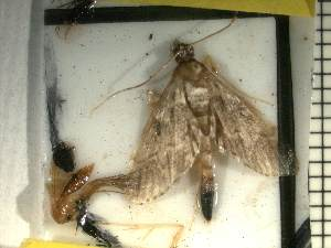 ( - Moth 9)  @12 [ ] Unspecified (default): All Rights Reserved  Unspecified Unspecified